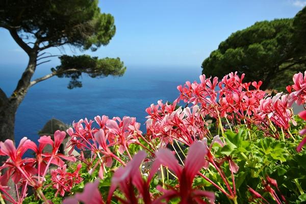 rosa Blumen vor dem Meer