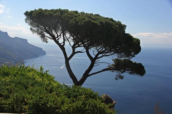Baum vor Meer, natur