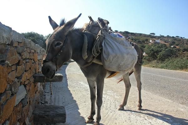 Esel Natur Segelreisen Sporedo